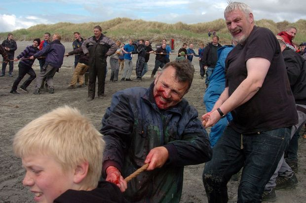 Pendant le Grindadrap de 2012, des hommes tirent à la corde pour ramener les baleines sur la terre ferme.