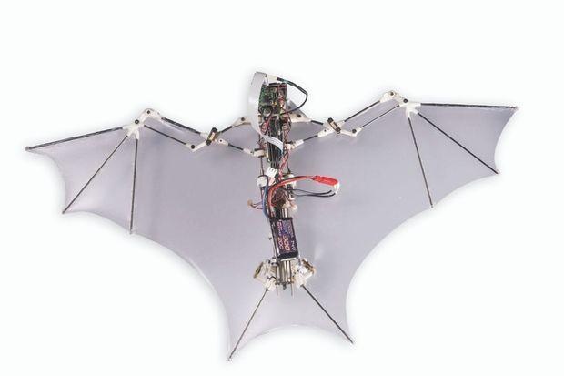 Le Bat Bot