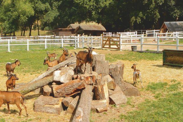 L'ARCHE DE NOÉ DE BB Plus de 6 000 animaux en charge, soit pour 2018 : 2 003 moutons, 913 chats, 828 équidés, 763 bovins, 606 chiens, 382 chèvres, 142 cochons, 243 volailles, 90 daims, 39 lapins, 104 Nac, « nouveaux animaux de compagnie ».