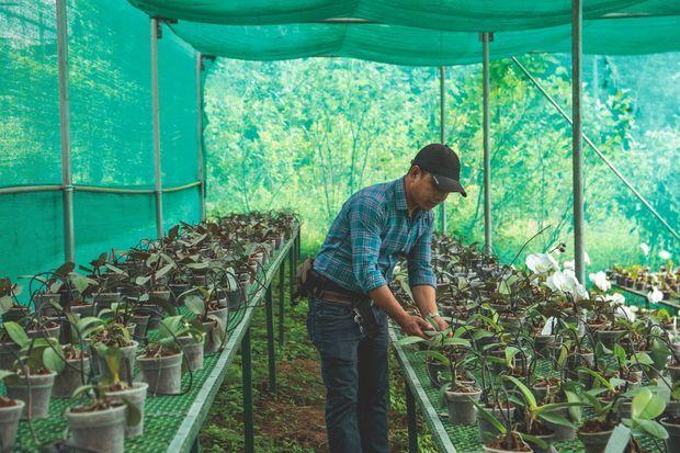 A Namthang, le gouvernement encourage l'horticulture pour augmenter les revenus des paysans.