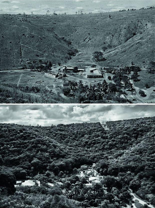 L'Instituto Terra (Minas Gerais) en haut en 2001 et en bas en 2013: 2 millions d'arbres plantés