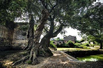 Un des sites où furent prélevés les arbres et les habitations. Toute cette zone est sous les eaux depuis 2006.