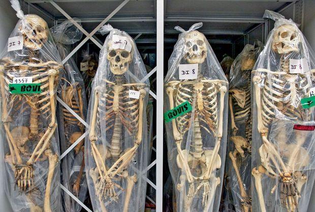 La collection de squelettes, entreposée dans les réserves.