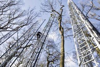 SC_Climbing_mast_credit_