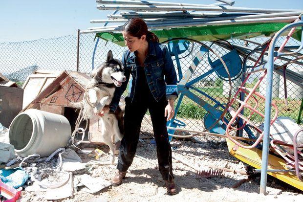 Ce husky, qui appartient à un migrant, a commencé par grogner et aboyer. Trois minutes plus tard, il est dompté.