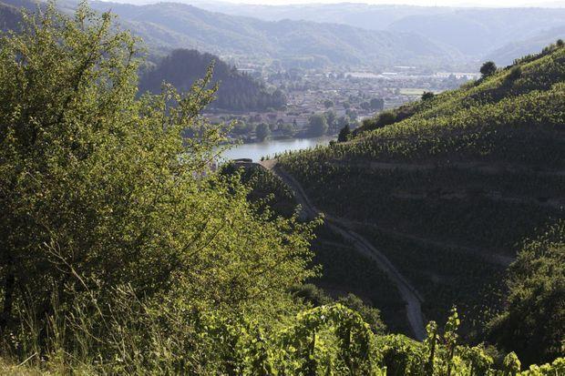 Le vignoble de l'Hermitage surplombe le Rhône depuis le Moyen Age.