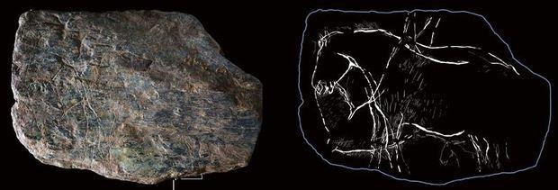 """Une plaquette de schiste, datant de 12 500 av., d'une dizaine de cm. """"Kezeg brav"""" en breton, ou """"les grands chevaux"""". Gravée des deux côtés, on aperçoit au verso au moins deux équidés et un poulain. A dr., le croquis de Camille Bourdier"""