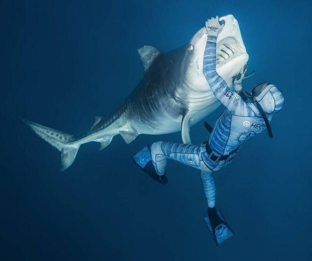"""Pierrick Seybald maîtrise la technique de l'""""immobilité tonique"""", permettant d'étourdir momentanément le requin-tigre."""