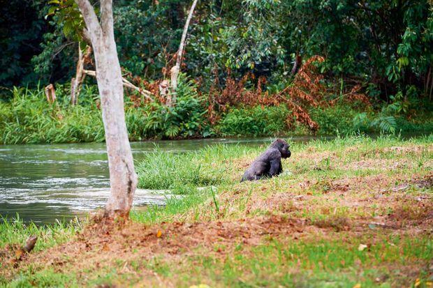 Grosse frayeur pour Kuimba qui a involontairement plongé dans la rivière.
