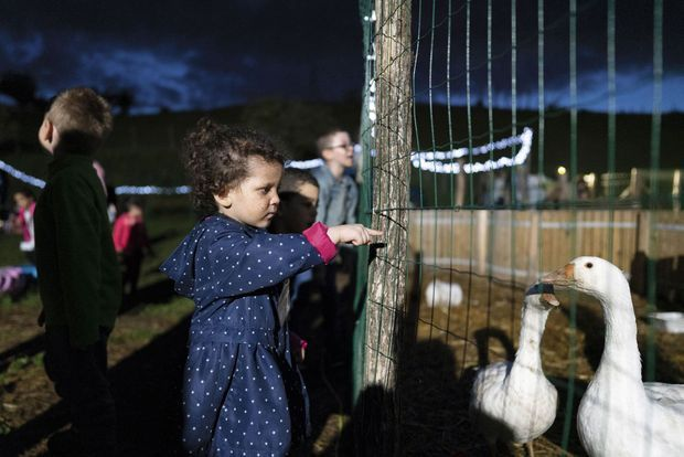 Free from any obstacle, Ana, 3 years, discovers the geese of the educational farm of Bonnefamille (Isère).