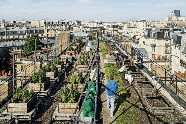 Dans le Ve arrondissement de la capitale, les toits de l'école nationale d'agronomie servent aux travaux pratiques.