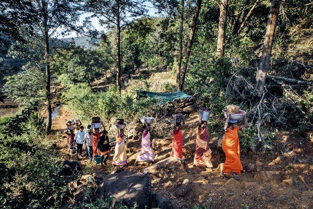 Les femmes rapportent la précieuse récolte au village, où elle sera pesée et transportée à la coopérative.