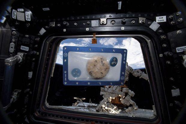 Confectionnés pour Noël, les cookies « expérimentaux » sont déjà redescendus sur Terre pour y être analysés.