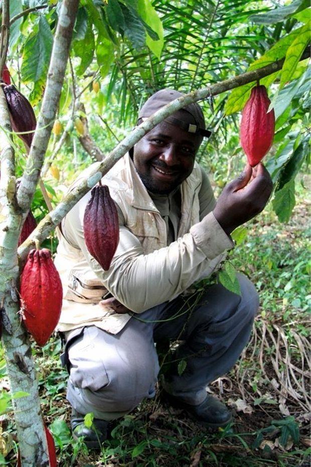 Au cœur de la plantation Ngassam Farm, au Cameroun, la fierté du propriétaire devant ses cacaoyers.