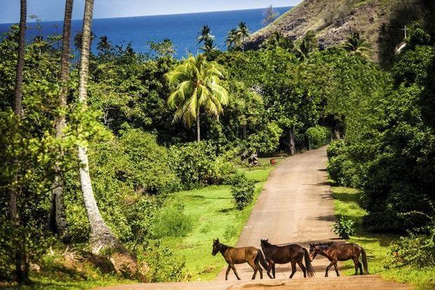 """Sur l'île de ua Huka, surnommée """"l'île aux chevaux""""."""