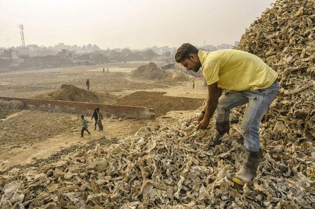 Des montagnes de peaux imprégnées de chrome épandent leur poison dans les sols et les eaux.