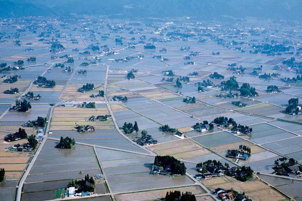 Le village de Sankyo, à l'intérieur des terres de Toyoma, avec ses centaines de ferme au milieu des plantations de riz.