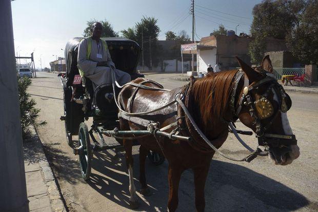 Depuis l'âge de 12 ans, Yasser conduit les touristes en calèche jusqu'au temple d'Edfou.