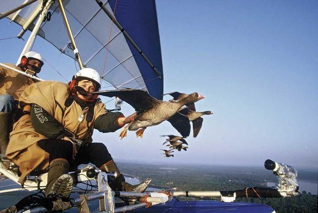 Paola à l'avant, Christian, le pilote, à l'arrière, pour cette première migration avec des oies naines, en 1999. 2 000 kilomètres à 60 km/h de moyenne et des étapes toutes les deux à quatre heures.