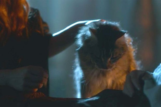 "Ser Pounce dans la saison 4 de ""Game of Thrones""."