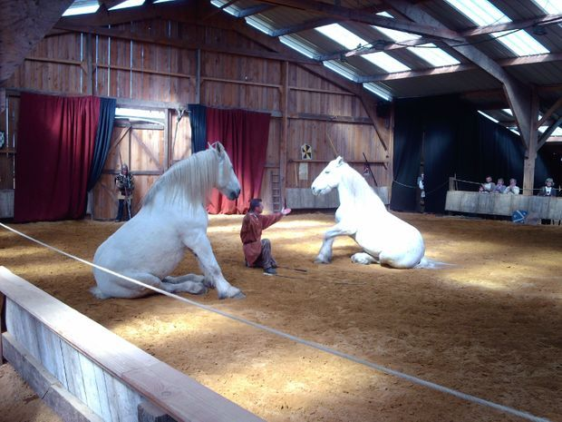 Spectacle-Haras-national-du-Lion-d'Angers©Mc-Arnaud-Ranch-(7)-