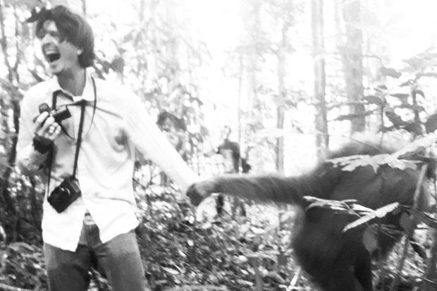 Cet orang-outan sauvage voulait-il monter quelque chose au photographe ?
