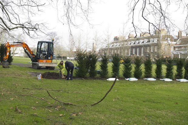Plantation d'une haie à Kensington Palace, le 27 janvier 2017