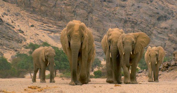 Troupeau d'éléphants, Namibie.