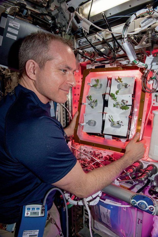 Un astronaute surveille la pousse des salades