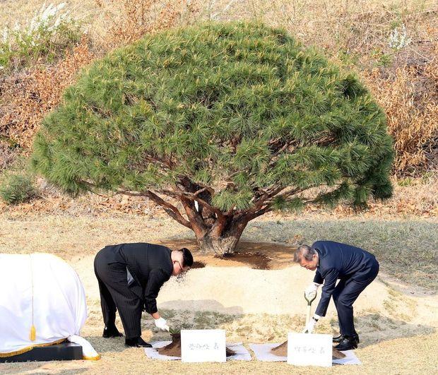 Un geste symbolique : l'arrosage du pin, emblème de la paix et de la prospérité entre les deux Corées.
