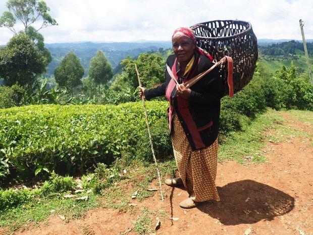 Une paysanne dans les champs de thé.