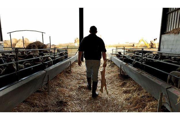 Vendredi 2mars, à Abilly, en Indre-et-Loire.  Christophe Dujon transporte hors de sa bergerie un agneau  atteint par le virus, qui a dû être euthanasié.