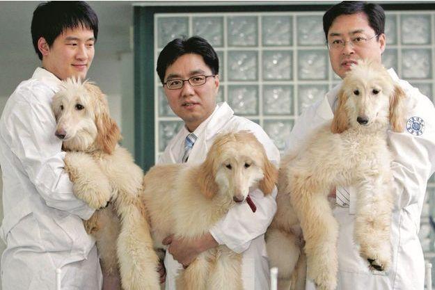 Les premières chiennes clonées tenues par trois des collègues de Hwang Woo-suk.
