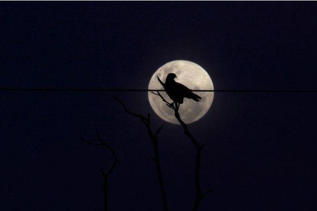 """L'exposition """"Nuit"""" dévoile tous les mystères de la vie nocturne. (Photo d'illustration)"""