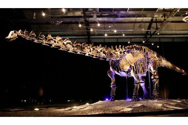Un squelette d'Apatopsaurus, un dinosaure au long cou ressemblant au Seitaad ruessi même si ce dernier est beaucoup plus petit.