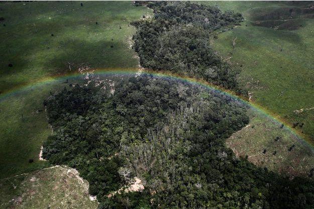 La forêt amazonienne est une des plus grandes réserves d'espèces vivantes inconnues.