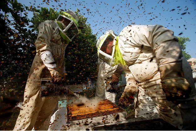 Des apiculteurs.