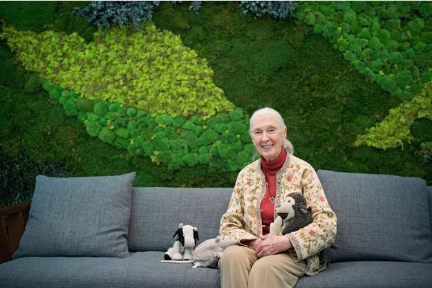 A Paris, le 19 janvier, dans les bureaux d'OctoTechnology, l'entreprise de son ami François Hisquin. Jane ne se sépare jamais de ses mascottes : une vache contre l'élevage intensif, un rat contre l'utilisation des animaux-cobayes et un singe pour la préservation de l'environnement.