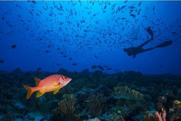 Le niveau des océans pourrait augmenter de 51 cm à 1,3 mètre durant ce siècle si le monde continue à dépendre dans une aussi large mesure des énergies fossiles