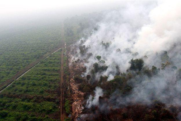 Photo aérienne des fumées qui se dégageaient des forêts indonésiennes en 2015