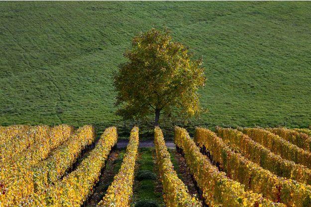 La Gironde est le département le plus écolo de France.