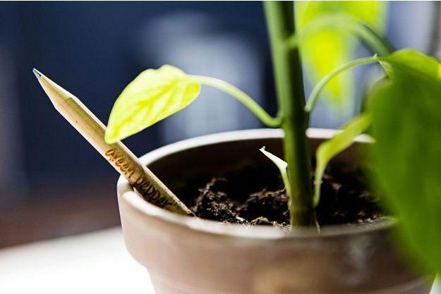 Le crayon en bois Sprout dispose d'une capsule biodégradable qui contient des graines.