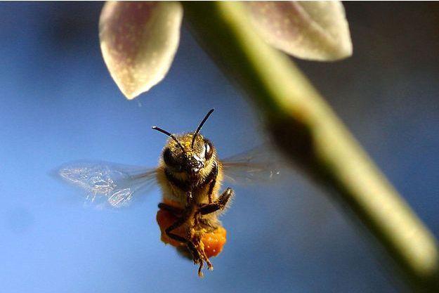 Illustration d'une abeille.