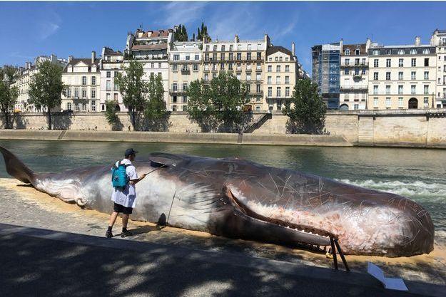 La baleine est échouée Quai de la Tournelle.
