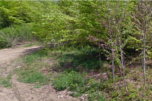 Le corps de l'adolescente a été retrouvé dans ce bois, en Belgique.