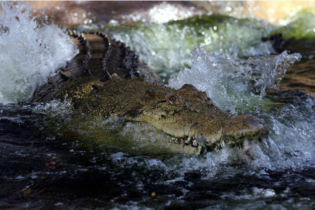En 2005, un crocodile du parc national de Kakadu avait tué un touriste de 56 ans (photo prise en 2005).