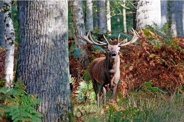 Un chasseur de l'Oise a été tué par un cerf.