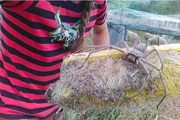 Charlotte, l'araignée qui a terrorisé le web