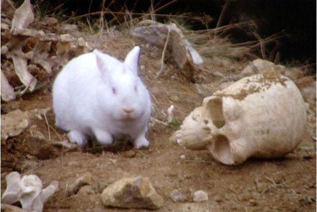 """Le lapin sanguinaire du film des Monty Python """"Sacré Graal !"""""""