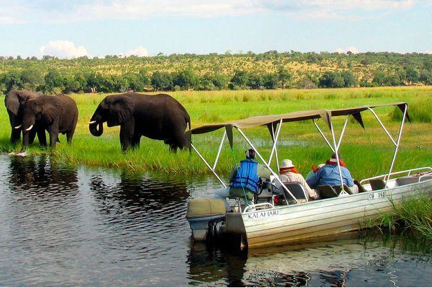Les safaris en Zambie sont des véritables attractions pour les touristes.